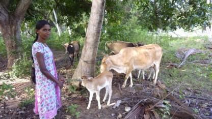 De kristne på Sri Lanka har brug for bibler og husdyr
