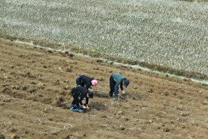 Nordkorea - Forfulgte kristne - nordkoreanske kvinder kultiverer landbrugsjord